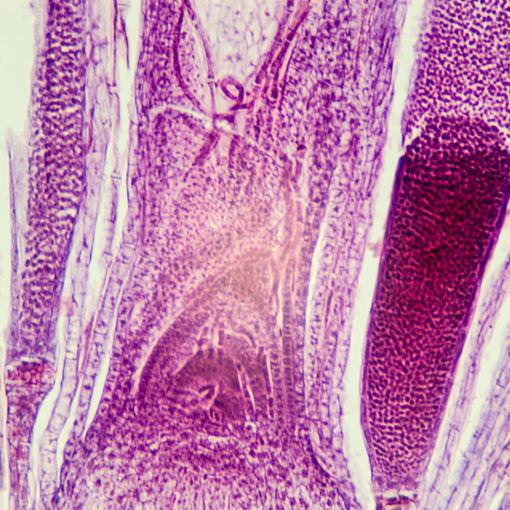 Bild på Botanik - Mossor & Lavar