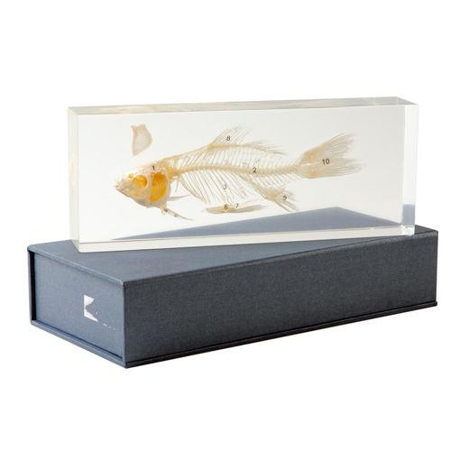 Bild på Fiskskelett