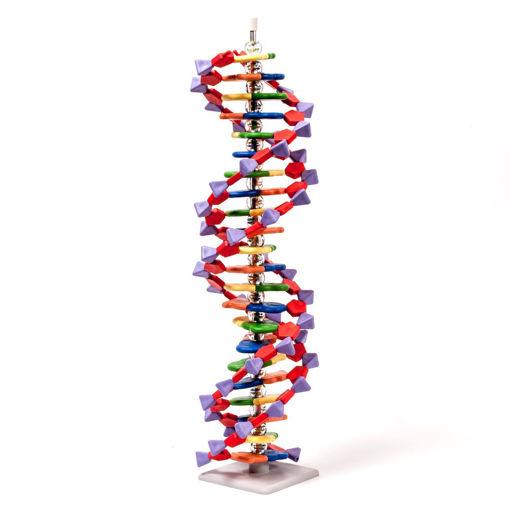 Bild på DNA modell 22 lager