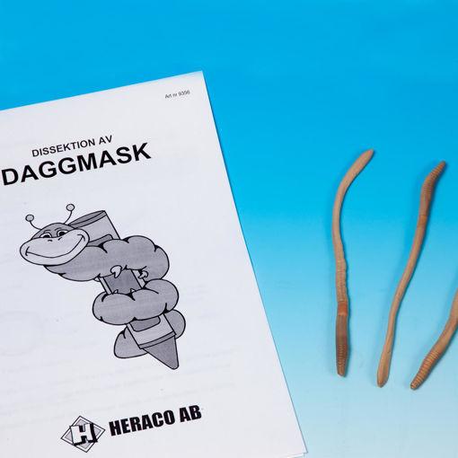 Bild på Daggmask konserverad i alkohol /10st