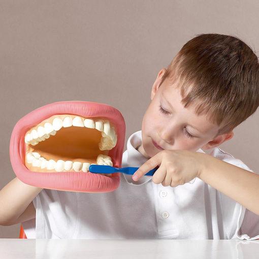 Bild på Tandborstning demonstration