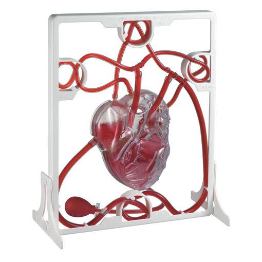 Bild på Hjärta funktionsmodell