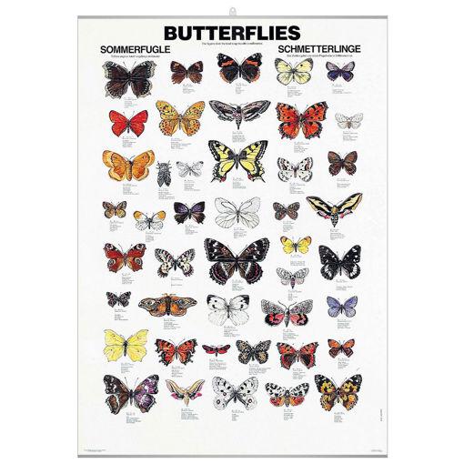Bild på Fjärilar pl.