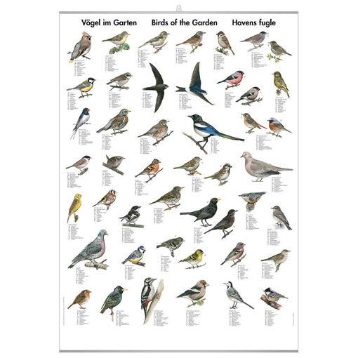 Bild på Fåglar i trädgården pl.