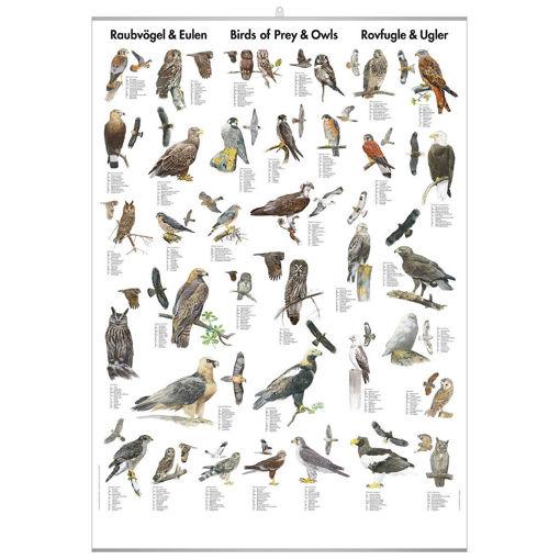 Bild på Rovfåglar och ugglor pl.