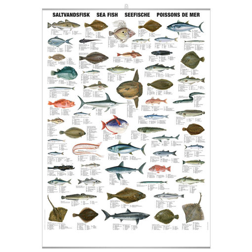Bild på Saltvattenfisk pl.