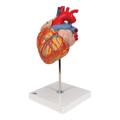 Bild på Hjärta G12 1000268