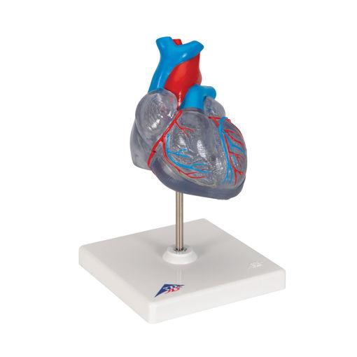 Bild på Hjärta transparent G08/3 1019311