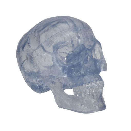 Bild på Kranium transparent A20/T 1020164