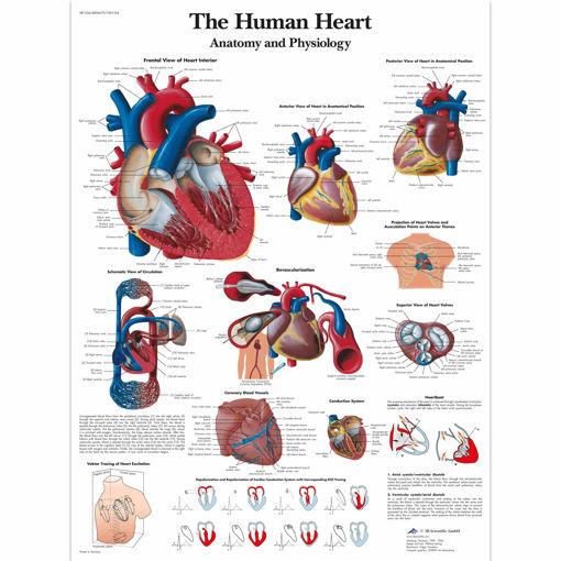Bild på Hjärtat VR1334 1001524