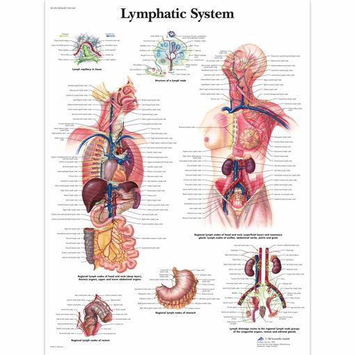 Bild på Lympasystemet VR1392 1001540