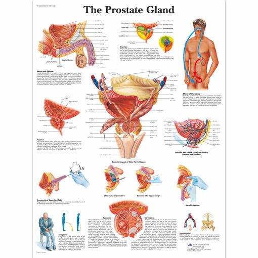 Bild på Prostata VR1528 1001566