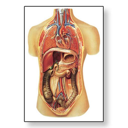 Bild på Inre organ V2006M 1001155