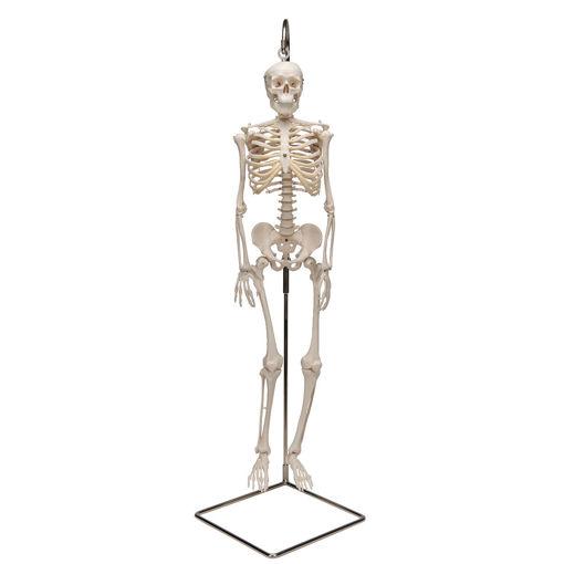 Bild på Miniskelett hängande Shorty A18/1 1000040