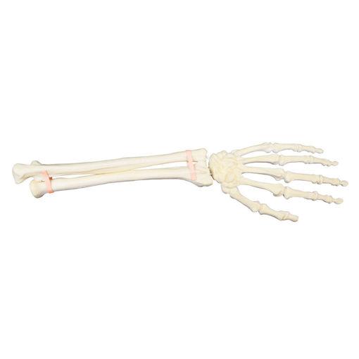 Bild på Hand underarm vänster ORTHOBone Pre 1018337