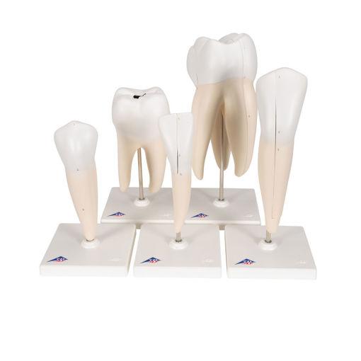 Bild på Tänder /5st D10 1017588