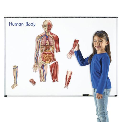 Bild på Magnetiska Kroppen